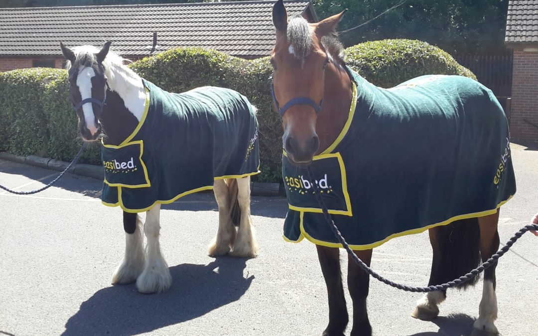 Riding for the Disabled are looking good in their rugs