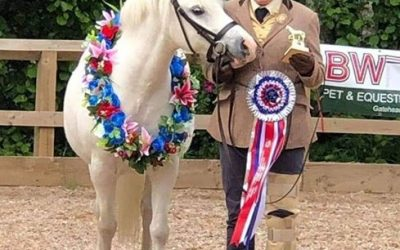 Introducing Lightning – Woody's Horse of the Month for November