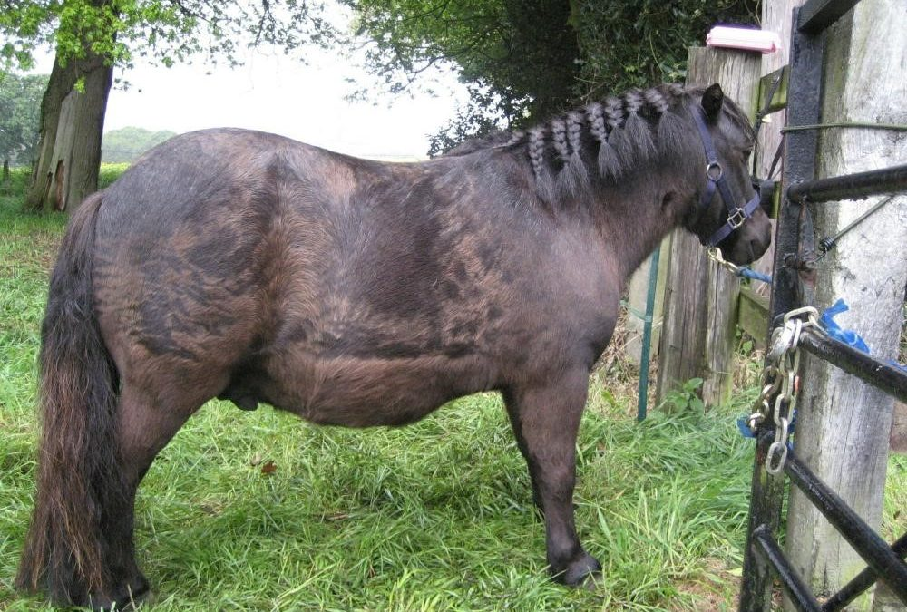 Equine obesity an equine welfare concern!