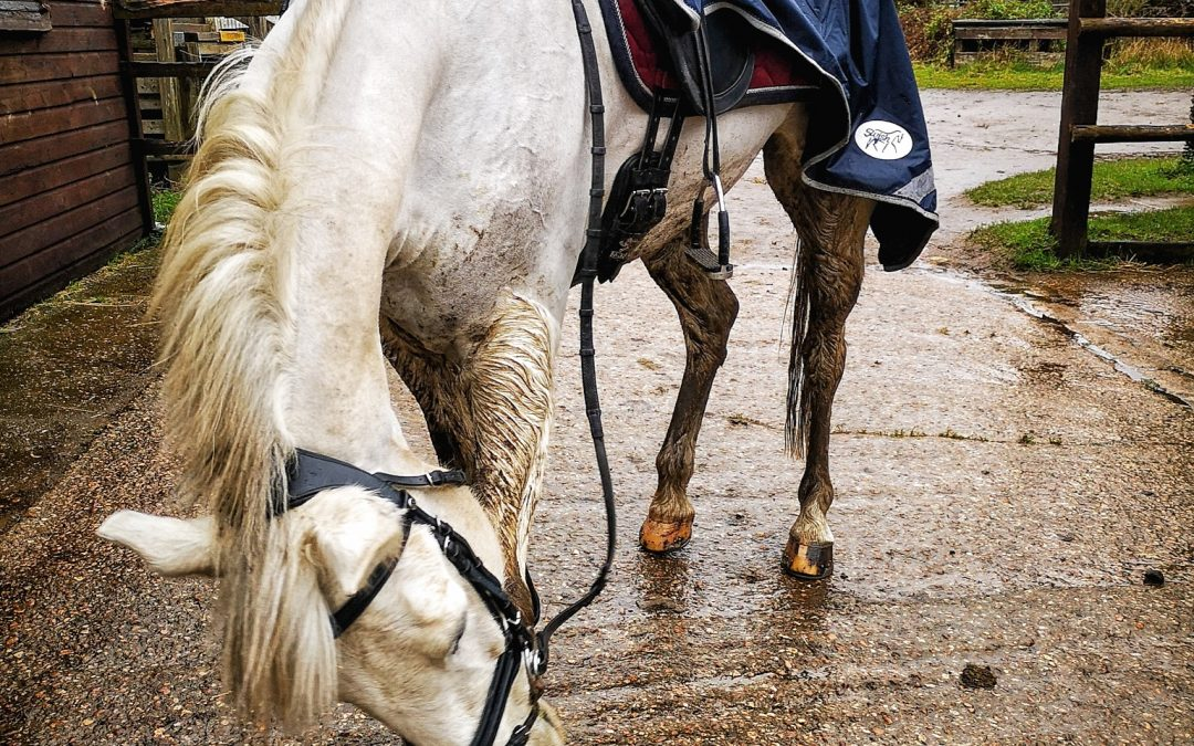 Top grooming tips from aspiring eventing team